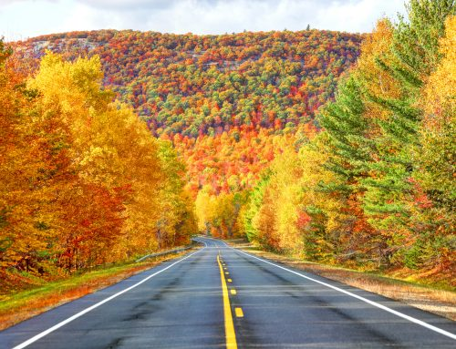 4 Reasons Why You Should Travel In the Fall